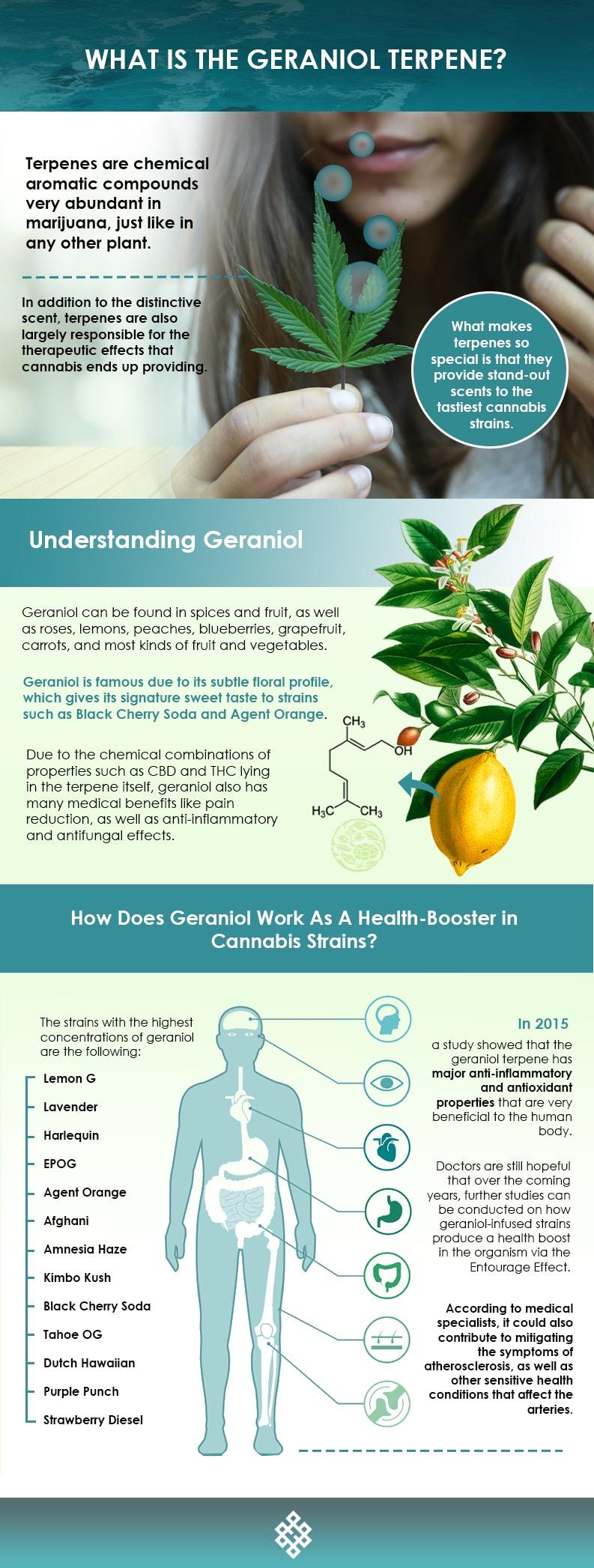 Geraniol Terpene, What Is The Geraniol Terpene?