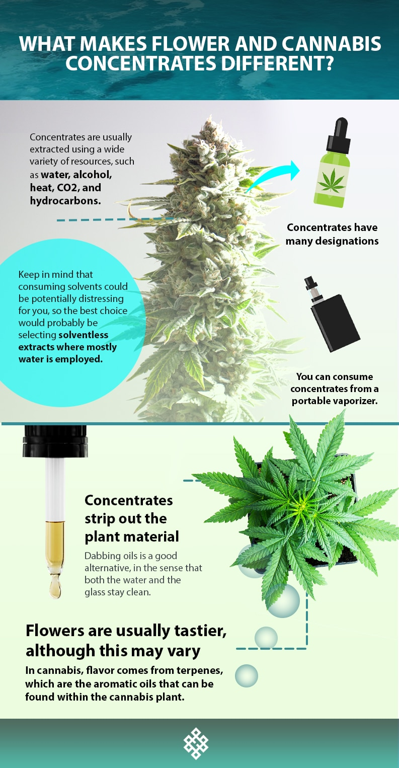 , What Makes Flower and Cannabis Concentrates Different?