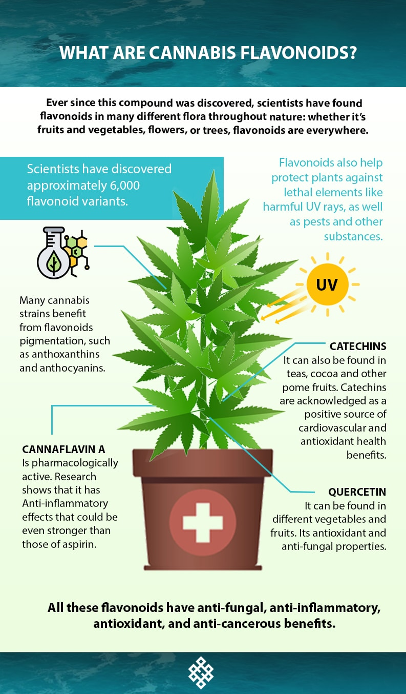 , What Are Cannabis Flavonoids?