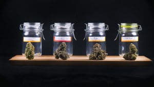 cannabis products, Cannabis Products for Beginners